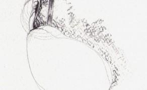 Seme Onirico II