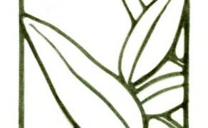 Salvia I